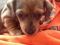 5wks old will have shots and be wormed very loving to