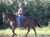 We have several Morgan horses for sale. Do you want a