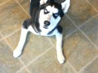 . We have to sell our husky. Her name is Annie. We