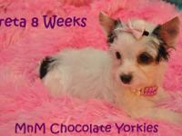 We have beautiful Parti Yorkies - male and female -