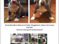 Great Bloodline of Gotti, Muggleston, Razor, Hurricane,