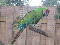 I am selling my beautiful pair of macaws, I had them