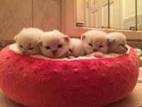 Available for adoption are 5 adorable registered