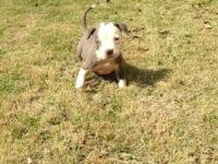 My name is nick I recently got a Red Nose pitbull from