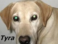 Tyra is a wonderful female and does not have a bad bone