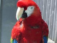 "My scarlet macaw is a ""double rescued"" bird, in"