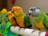 We always have the sweetest Senegal parrots! Taking a