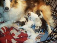 I have 4 pups to pick from, 3 different litters, 3-