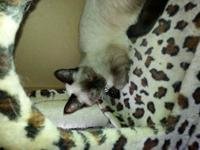 I have 2 beautiful pure reproduced seal point siamese
