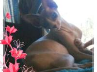 Full Blooded TICA Sphynx. they are both a year old. are