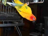 I have a gorgeous Parrot named Kewi she is about 5 1/2