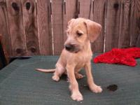 we have 3 lovely mixed terriers ready for adoption. We