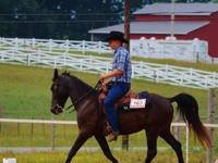 I have a registered TWH gelding that I want to sell. He