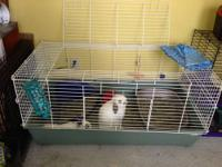 Two beautiful white bunnies for adoption! One is a