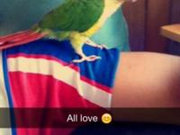 I'm selling my yellow sided conure because I don't have