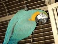 I have a beautiful Catalina Macaw that I need to