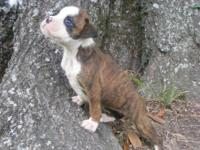 ***NEW PUPPIES AVAILABLE! Born 6/11/2013 &
