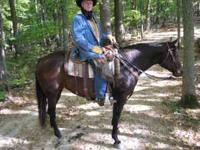 Carley is a seasoned trail horse who has been ridden in