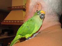 I have a 4 month old Peach Front Conure for sale. Also