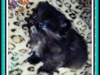 Purrepiphany has female kittens that will be available