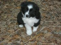 Want a super KID proofed puppy?Loving,smart and raised