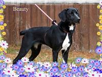 Beauty's story You can fill out an adoption application