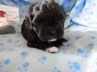 Charm is a black with white paws and chest, female,