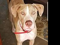 Beaux's story Beaux is a sweet boy who loves to