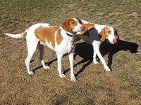 Beaux & Roux's story Beaux and Roux are available for
