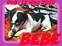 BEBE's story Please contact Jenny Cope