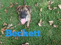 Beckett's story Beckett is a wonderful guy! This