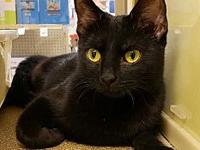 Becky's story Hi, I'm Becky, a 1 yr old female black