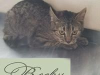 Becky is a lovely young lady kitty ready for her life