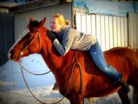 10 year old quarter horse gelding, approx 14.3 hands.