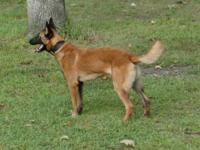 I have a wonderfull belgian malinios boy for rehoming