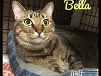 Bella - 107 / 2018's story Please contact Maumelle