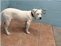 Bella A5246270 @ Downey's story *THIS DOG IS NOT IN THE
