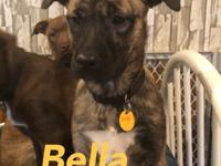 Alfina is a 4 month old lab mix puppy that was dumped
