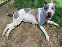 BELLA's story Bella is an affectionate, intelligent,