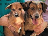 Bella Amor, Daisy's story BONDED PAIR!! Bella Amore
