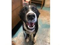 Bella's story Bella was found on 10/16/18 at Willamette