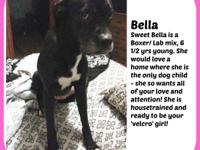 BELLA NEEDS A FOSTER OR FOREVER HOME NOW Bella is a
