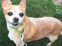 Bella's story Bella is a shy old gal who can't wait to