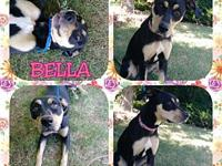 BELLA's story Please contact Brandi