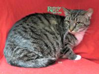 Bella is a sweet 7 yr. old kitty already spayed. She is