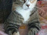 Bella's story Beautiful Bella. Looking for a mature cat