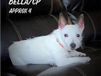 My story Meet Bella/CP Bella is approx 4 yrs old and