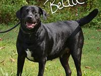 Bella's story Bella is a sweet loving fur baby in