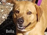 Bella's story By adopting me today you will save the