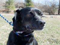 Beautiful Bella Marie is a 9 year old mixed breed